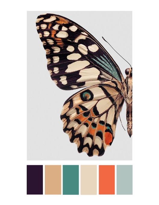 butterfly color story